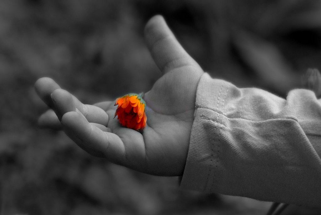 Eduación emocional y el mindfulness - cocotips